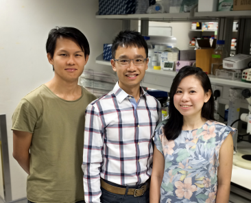 Photo: Dr. Xinhong Lim (centre) with his lab members, Tham Khek Chian and Lim Beng Hui