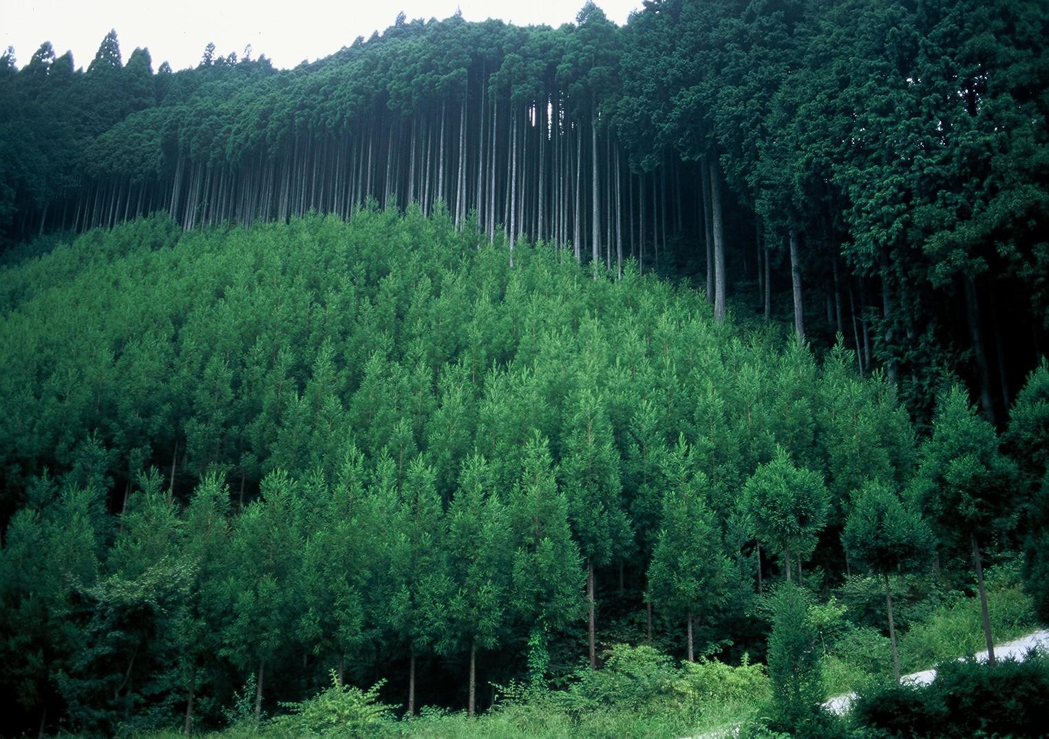 BioCarbon Engineering-Planting 1 billion trees using drones