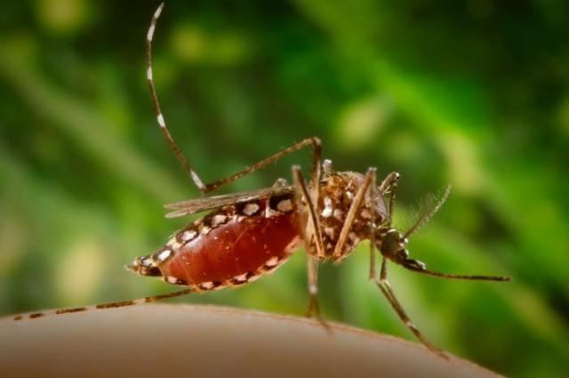 zika 2