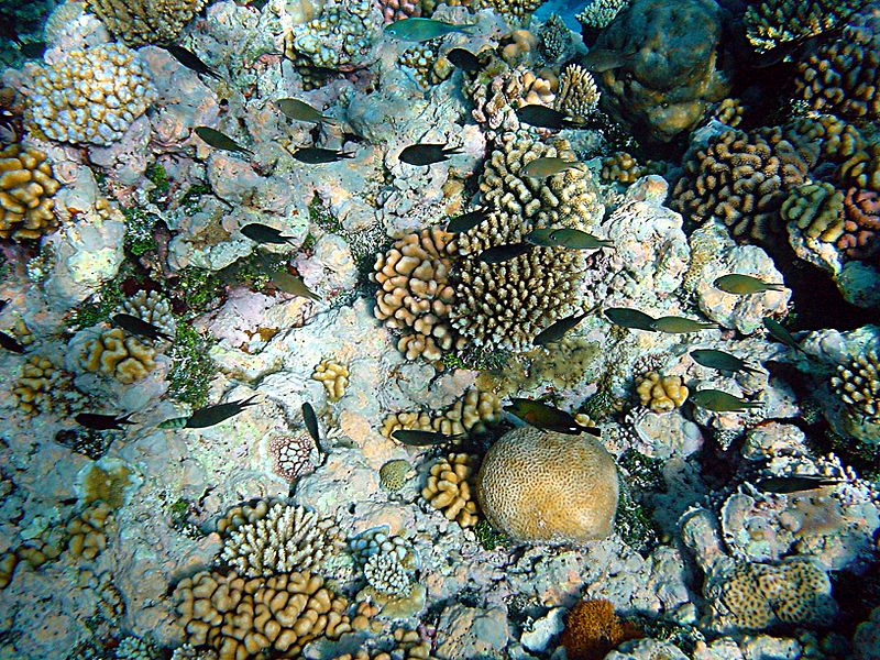 800px-Coral_reefs_with_fishes.JPG