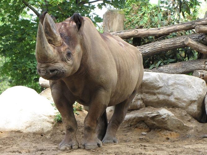 rhino-824413_960_720
