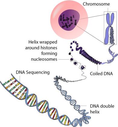 genetics_overview