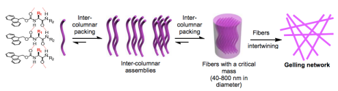 Formation of the supergelator fiber network. © Institute of Bioengineering and Nanotechnology