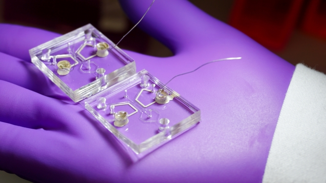 1. Microfluidic device